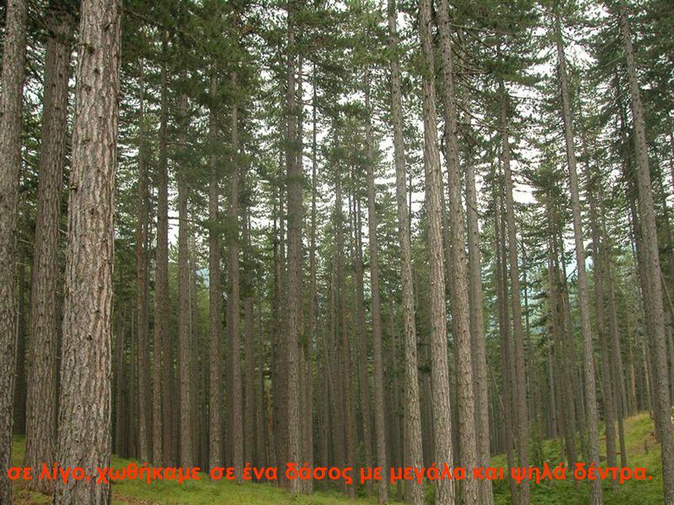 σε λίγο, χωθήκαμε σε ένα δάσος με μεγάλα και ψηλά δέντρα.
