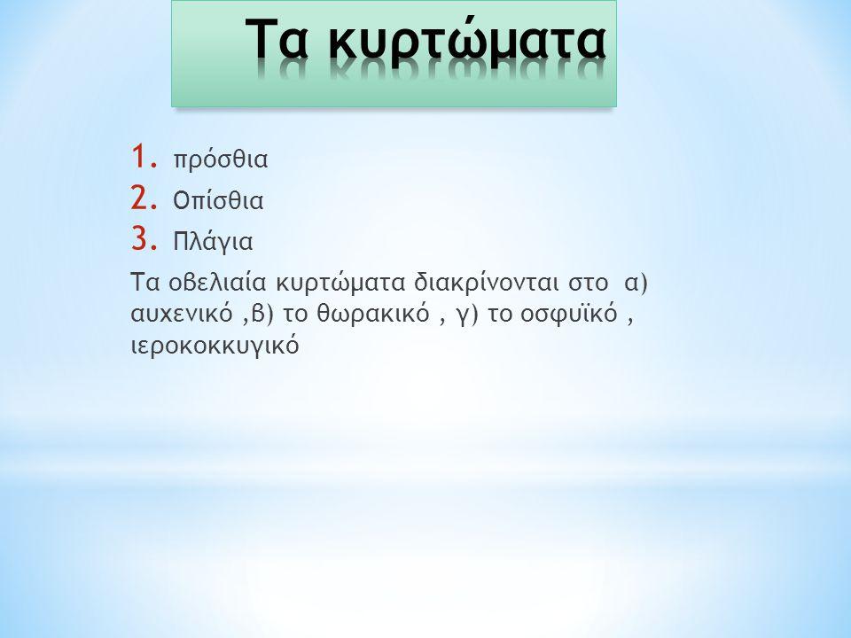 1. πρόσθια 2. Οπίσθια 3. Πλάγια Τα οβελιαία κυρτώματα διακρίνονται στο α) αυχενικό,β) το θωρακικό, γ) το οσφυϊκό, ιεροκοκκυγικό