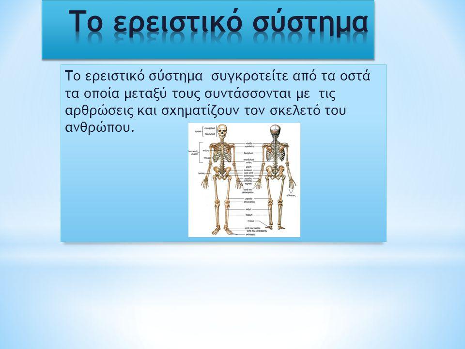 * Άνω άκρα : οστά της ωμικής ζώνης ( κλείδα ωμοπλάτη ), από το βραχιόνιο οστό, τα οστά του πήχεως ( κερκίδα,ωλένη) οστά χεριού * Κάτω άκρα : αποτελείτε από τα οστά της πυέλου, από το μηριαίο οστό, από τα οστά της κνήμης και τα οστά του άκρου ποδιού ( φαλαγγών των δακτύλων ) * Ο σκελετός του κορμού : α) από το σκελετό της κεφαλής, β) από την σπονδυλική στήλη γ) από τον σκελετό του θώρακα