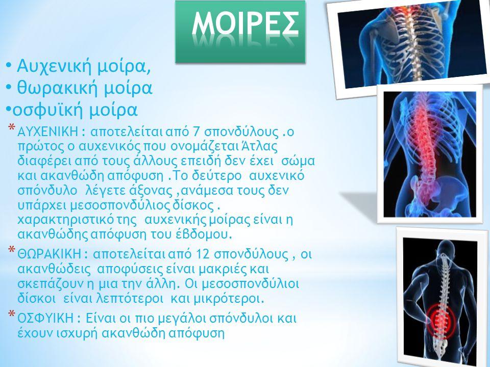 Αυχενική μοίρα, θωρακική μοίρα οσφυϊκή μοίρα * ΑΥΧΕΝΙΚΗ : αποτελείται από 7 σπονδύλους.ο πρώτος ο αυχενικός που ονομάζεται Άτλας διαφέρει από τους άλλ