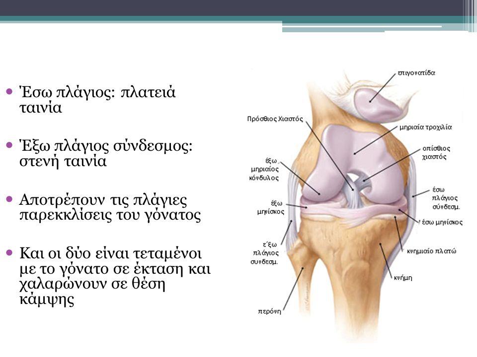Έσω πλάγιος: πλατειά ταινία Έξω πλάγιος σύνδεσμος: στενή ταινία Αποτρέπουν τις πλάγιες παρεκκλίσεις του γόνατος Και οι δύο είναι τεταμένοι με το γόνατ