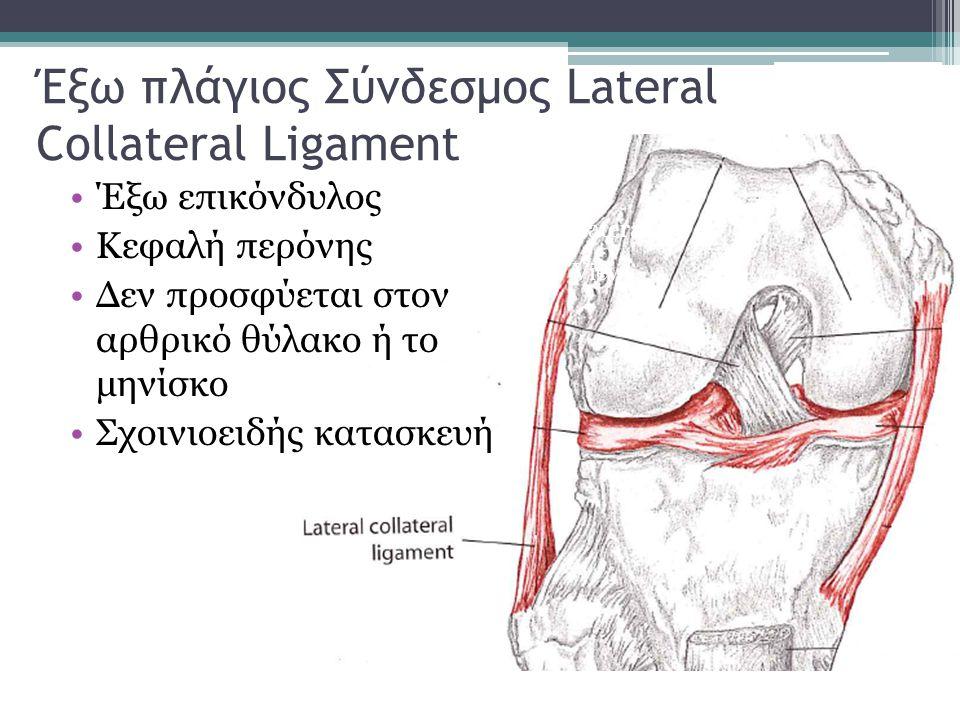 Έξω πλάγιος Σύνδεσμος Lateral Collateral Ligament Έξω επικόνδυλος Κεφαλή περόνης Δεν προσφύεται στον αρθρικό θύλακο ή το μηνίσκο Σχοινιοειδής κατασκευ