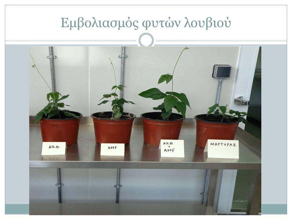 Εμβολιασμός φυτών λουβιού