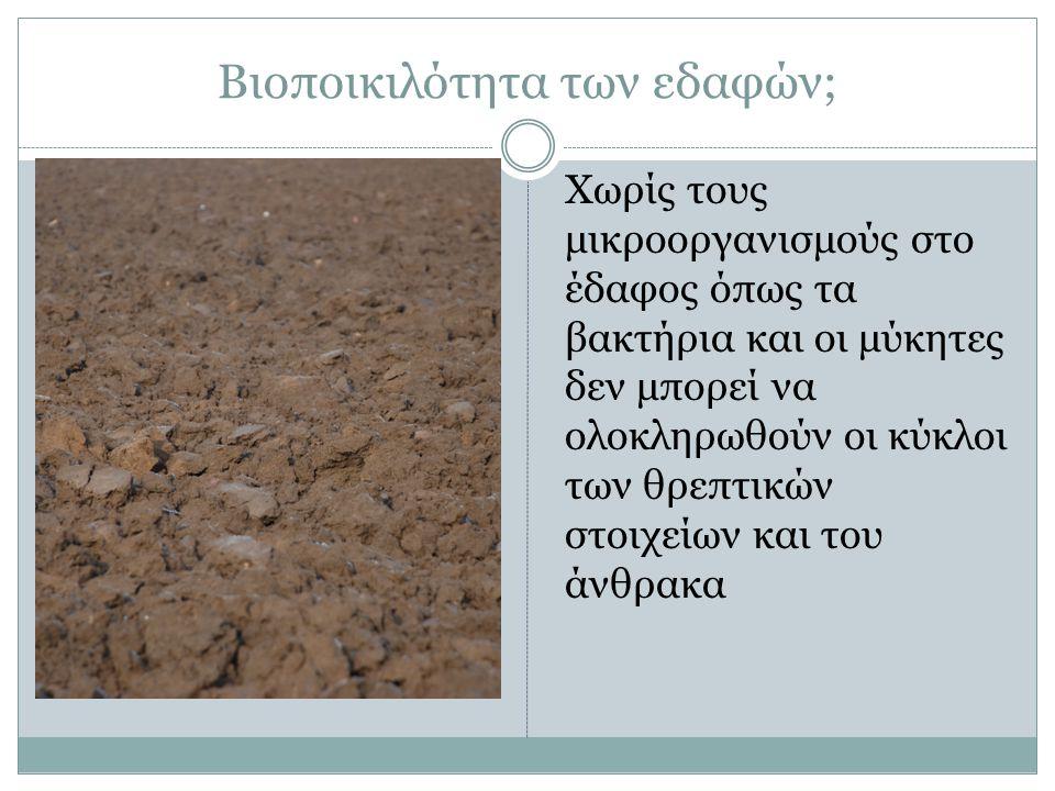 Βιοποικιλότητα των εδαφών; Χωρίς τους μικροοργανισμούς στο έδαφος όπως τα βακτήρια και οι μύκητες δεν μπορεί να ολοκληρωθούν οι κύκλοι των θρεπτικών στοιχείων και του άνθρακα