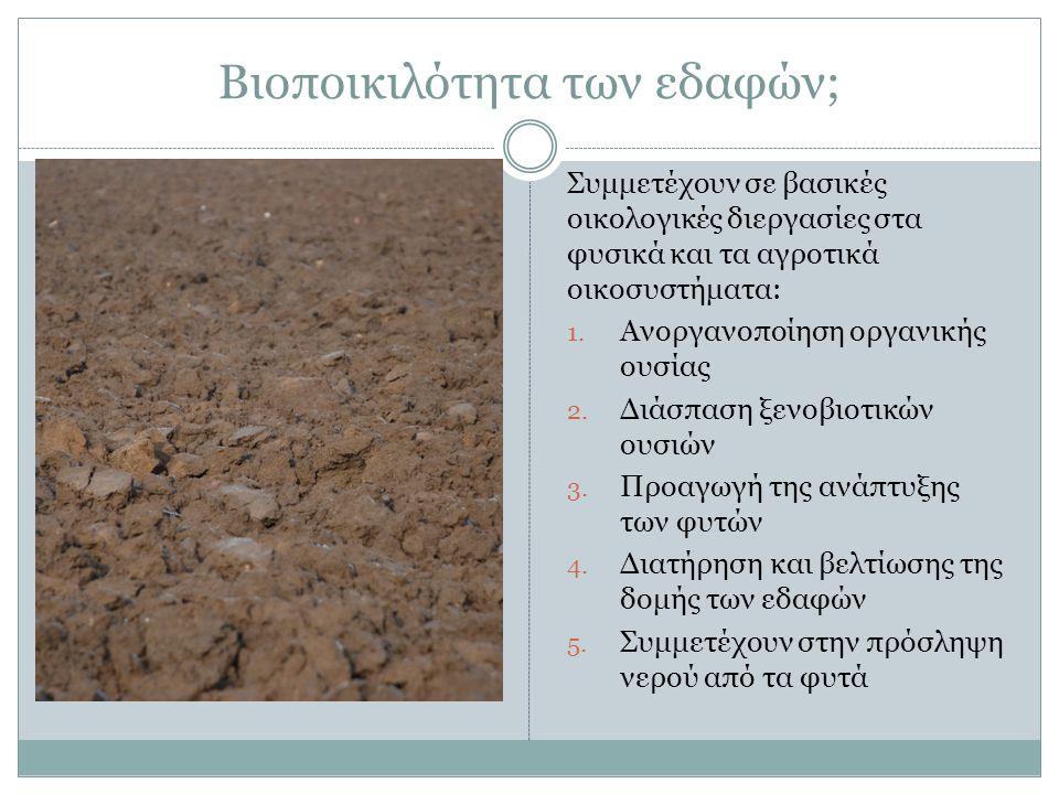 Βιοποικιλότητα των εδαφών; Συμμετέχουν σε βασικές οικολογικές διεργασίες στα φυσικά και τα αγροτικά οικοσυστήματα: 1.