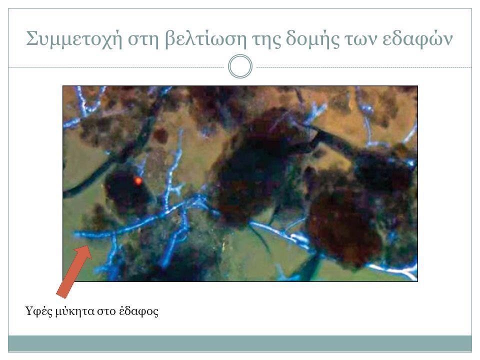 Συμμετοχή στη βελτίωση της δομής των εδαφών Υφές μύκητα στο έδαφος