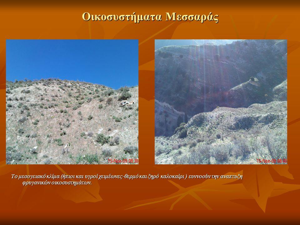 Οικοσυστήματα Μεσσαράς Το μεσογειακό κλίμα (ήπιοι και υγροί χειμέωνες-θερμό και ξηρό καλοκαίρι ) ευννοούν την αναπτυξη φρυγανικών οικοσυστημάτων.