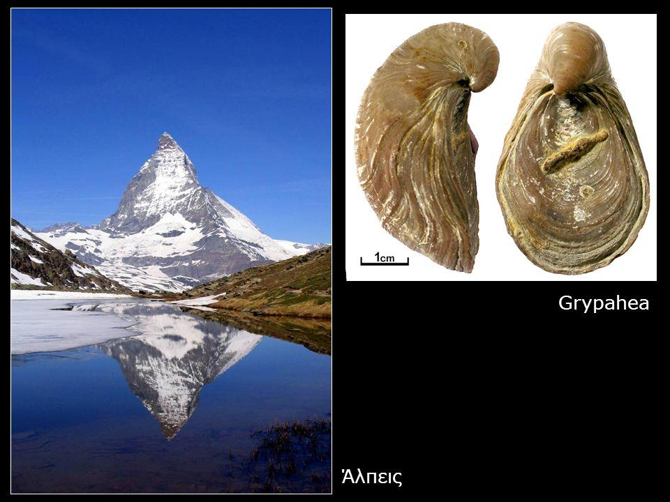 Άλπεις Grypahea