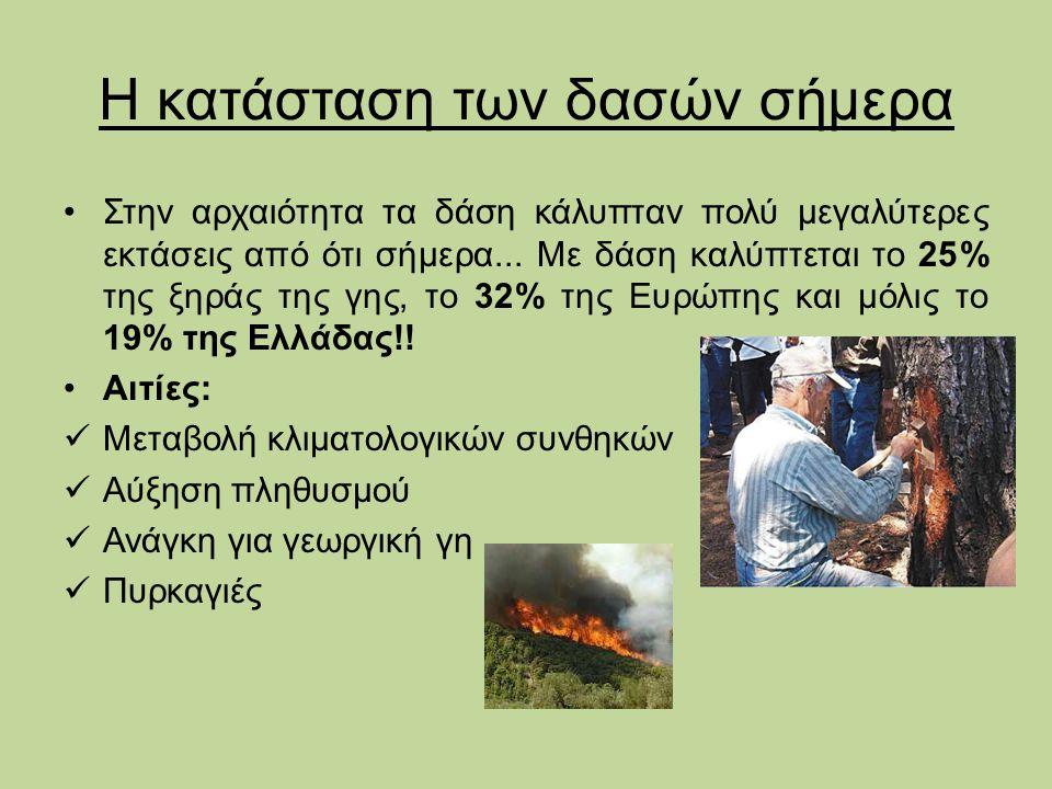 Ζώνες δασικής βλάστησης στην Ελλάδα Μεσογειακή ζώνη βλάστησης (φρύγανα και πεύκη) Παραμεσογειακή ζώνη (δρυς και καστανιά) Ζώνη δασών οξιάς – ελάτης και ορεινών κωνοφόρων Ζώνη ψυχρόβιων κωνοφόρων (δασική πεύκη) Εξωδασική ζώνη (πόες, θάμνοι)