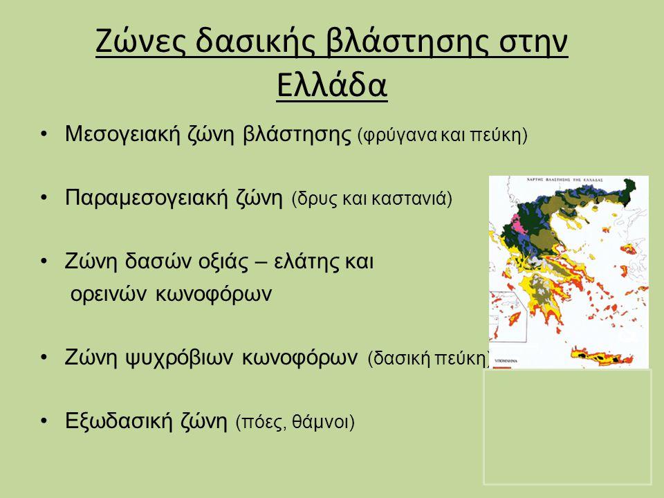 Ζώνες δασικής βλάστησης στην Ελλάδα Μεσογειακή ζώνη βλάστησης (φρύγανα και πεύκη) Παραμεσογειακή ζώνη (δρυς και καστανιά) Ζώνη δασών οξιάς – ελάτης κα