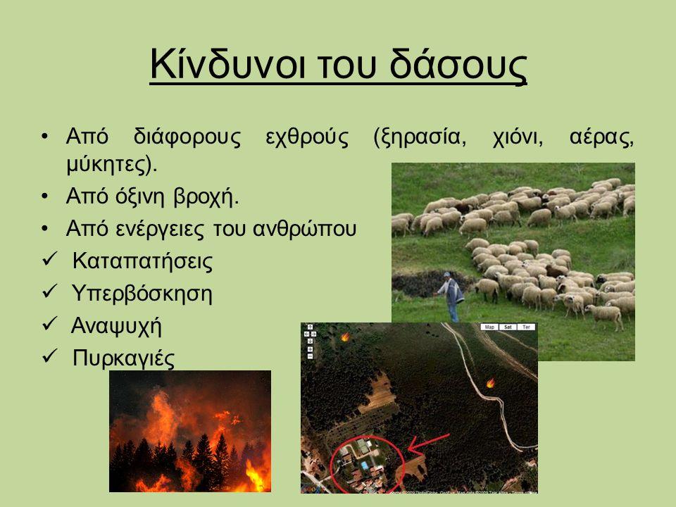 Κίνδυνοι του δάσους Από διάφορους εχθρούς (ξηρασία, χιόνι, αέρας, μύκητες). Από όξινη βροχή. Από ενέργειες του ανθρώπου Καταπατήσεις Υπερβόσκηση Αναψυ