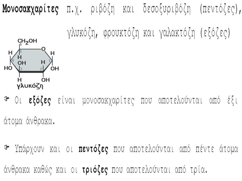 Μονοσακχαρίτες Γλυκόζη: η πιο συνηθισμένη μορφή σακχάρου Φρουκτόζη: βρίσκεται φυσιολογικά στα φρούτα, σε μερικά λαχανικά και στο μέλι Γαλακτόζη: βρίσκεται μόνο συνδεδεμένη με άλλους μονοσακχαρίτες