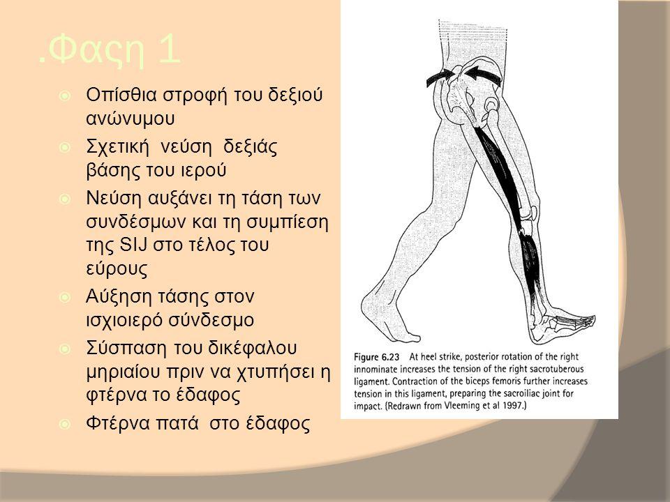 .Φαςη 1  Οπίσθια στροφή του δεξιού ανώνυμου  Σχετική νεύση δεξιάς βάσης του ιερού  Νεύση αυξάνει τη τάση των συνδέσμων και τη συμπίεση της SIJ στο