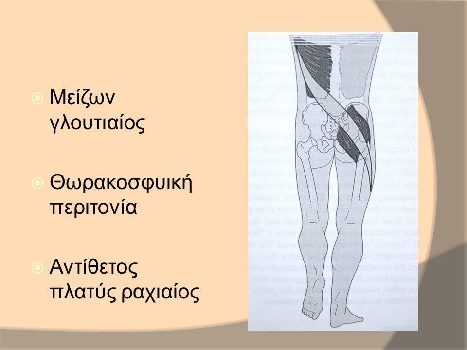 SCR/DR/AM/UH/NMS3/Sacro-iliac Joint Anatomy & Biomechanics/2008-9  Μείζων γλουτιαίος  Θωρακοσφυική περιτονία  Αντίθετος πλατύς ραχιαίος