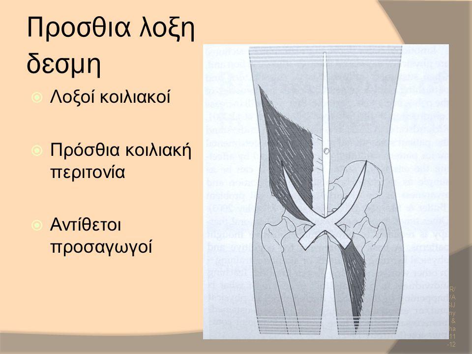 Προσθια λοξη δεσμη  Λοξοί κοιλιακοί  Πρόσθια κοιλιακή περιτονία  Αντίθετοι προσαγωγοί SCR/DR/ AM/UH/A NP/SIJ Anatomy & Biomecha nics/2011 -12