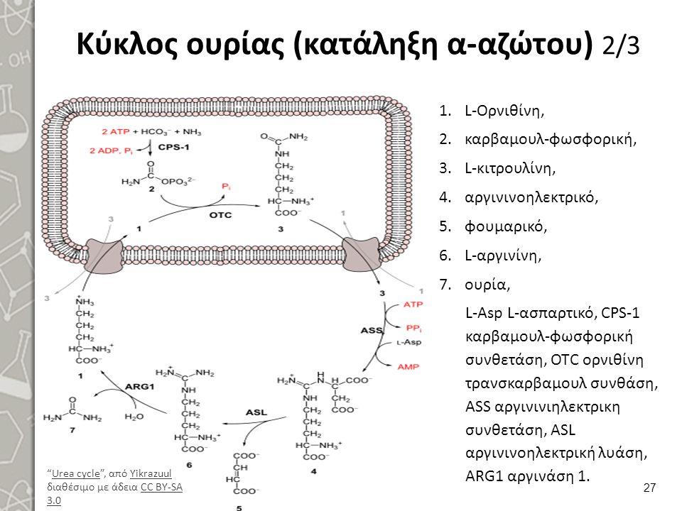 Κύκλος ουρίας (κατάληξη α-αζώτου) 2/3 1.L-Ορνιθίνη, 2.καρβαμουλ-φωσφορική, 3.L-κιτρουλίνη, 4.αργινινοηλεκτρικό, 5.φουμαρικό, 6.L-αργινίνη, 7.ουρία, L-Asp L-ασπαρτικό, CPS-1 καρβαμουλ-φωσφορική συνθετάση, OTC ορνιθίνη τρανσκαρβαμουλ συνθάση, ASS αργινινιηλεκτρικη συνθετάση, ASL αργινινοηλεκτρική λυάση, ARG1 αργινάση 1.