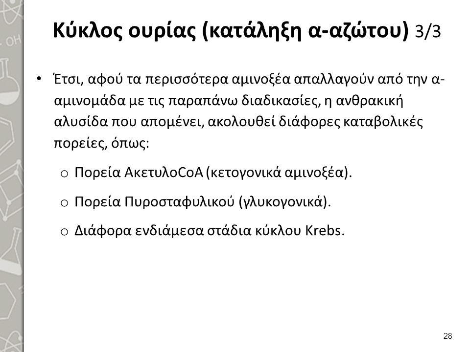 Κύκλος ουρίας (κατάληξη α-αζώτου) 3/3 Έτσι, αφού τα περισσότερα αμινοξέα απαλλαγούν από την α- αμινομάδα με τις παραπάνω διαδικασίες, η ανθρακική αλυσίδα που απομένει, ακολουθεί διάφορες καταβολικές πορείες, όπως: o Πορεία ΑκετυλοCoA (κετογονικά αμινοξέα).