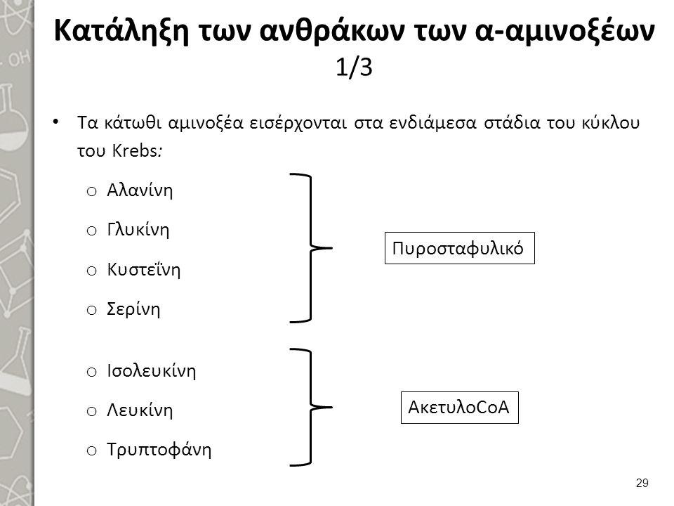 Κατάληξη των ανθράκων των α-αμινοξέων 1/3 Τα κάτωθι αμινοξέα εισέρχονται στα ενδιάμεσα στάδια του κύκλου του Krebs: o Αλανίνη o Γλυκίνη o Κυστεΐνη o Σερίνη o Ισολευκίνη o Λευκίνη o Τρυπτοφάνη 29 Πυροσταφυλικό ΑκετυλοCoA