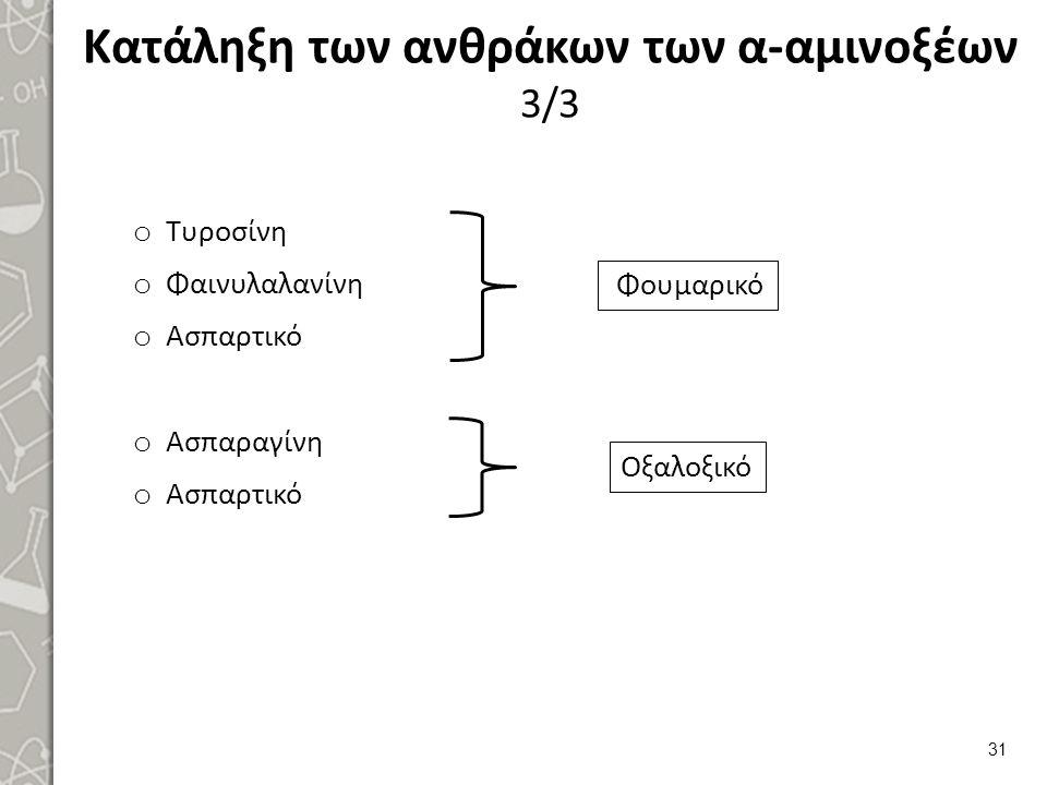 Κατάληξη των ανθράκων των α-αμινοξέων 3/3 o Τυροσίνη o Φαινυλαλανίνη o Ασπαρτικό o Ασπαραγίνη o Ασπαρτικό 31 Φουμαρικό Οξαλοξικό