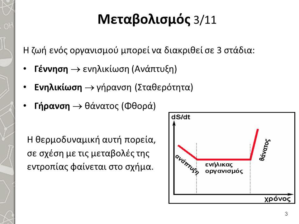 Μεταβολισμός 3/11 Η ζωή ενός οργανισμού μπορεί να διακριθεί σε 3 στάδια: Γέννηση  ενηλικίωση (Ανάπτυξη) Ενηλικίωση  γήρανση (Σταθερότητα) Γήρανση  θάνατος (Φθορά) 3 Η θερμοδυναμική αυτή πορεία, σε σχέση με τις μεταβολές της εντροπίας φαίνεται στο σχήμα.