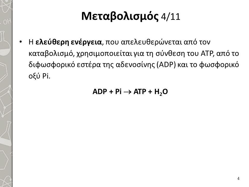Μεταβολισμός 4/11 Η ελεύθερη ενέργεια, που απελευθερώνεται από τον καταβολισμό, χρησιμοποιείται για τη σύνθεση του ATP, από το διφωσφορικό εστέρα της αδενοσίνης (ADP) και το φωσφορικό οξύ Pi.