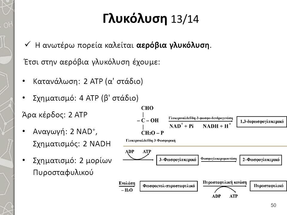 Γλυκόλυση 13/14 Κατανάλωση: 2 ΑΤΡ (α στάδιο) Σχηματισμό: 4 ΑΤΡ (β στάδιο) Άρα κέρδος: 2 ΑΤΡ Αναγωγή: 2 NAD +, Σχηματισμός: 2 NADH Σχηματισμό: 2 μορίων Πυροσταφυλικού 50 Η ανωτέρω πορεία καλείται αερόβια γλυκόλυση.