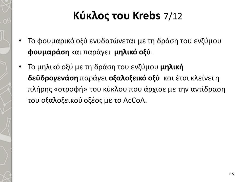 Κύκλος του Krebs 7/12 Το φουμαρικό οξύ ενυδατώνεται με τη δράση του ενζύμου φουμαράση και παράγει μηλικό οξύ.