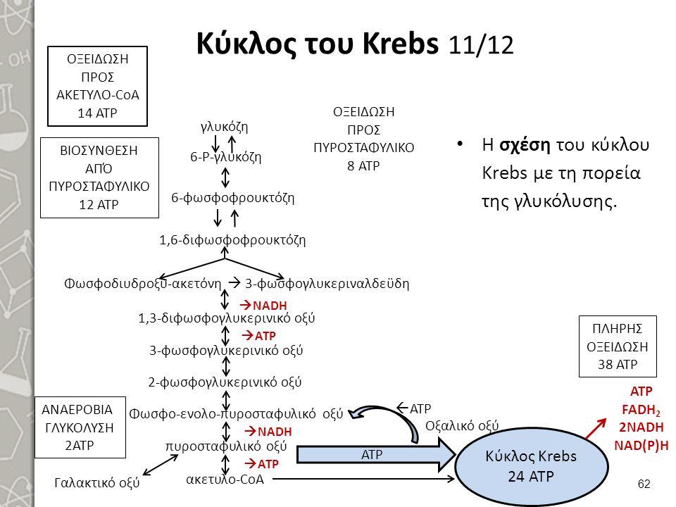 Κύκλος του Krebs 11/12 Η σχέση του κύκλου Krebs με τη πορεία της γλυκόλυσης.