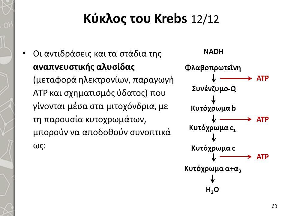 Κύκλος του Krebs 12/12 Οι αντιδράσεις και τα στάδια της αναπνευστικής αλυσίδας (μεταφορά ηλεκτρονίων, παραγωγή ATP και σχηματισμός ύδατος) που γίνονται μέσα στα μιτοχόνδρια, με τη παρουσία κυτοχρωμάτων, μπορούν να αποδοθούν συνοπτικά ως: 63 NADH ATP Φλαβοπρωτεΐνη Συνένζυμο-Q Κυτόχρωμα c Κυτόχρωμα α+α 3 H2OH2O Κυτόχρωμα b Κυτόχρωμα c 1