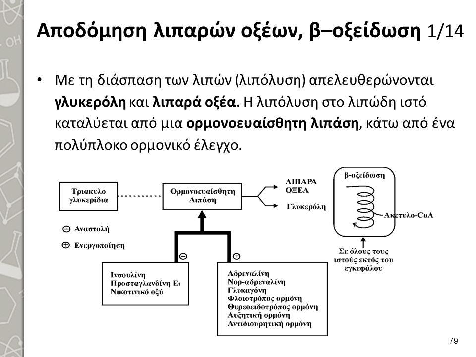 Αποδόμηση λιπαρών οξέων, β–οξείδωση 1/14 Με τη διάσπαση των λιπών (λιπόλυση) απελευθερώνονται γλυκερόλη και λιπαρά οξέα.
