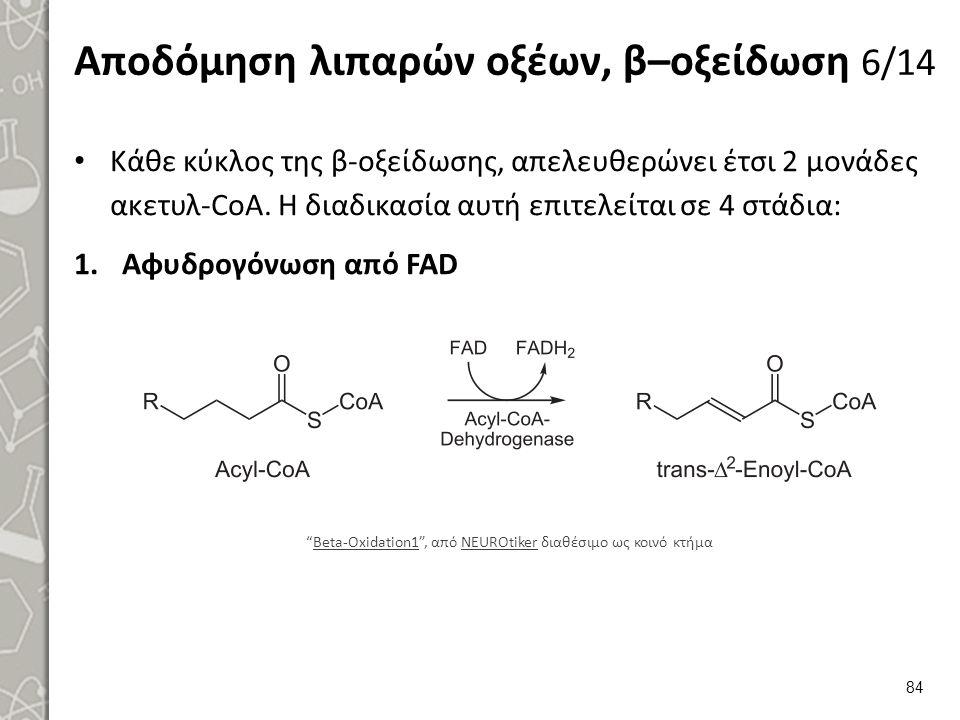 Αποδόμηση λιπαρών οξέων, β–οξείδωση 6/14 Κάθε κύκλος της β-οξείδωσης, απελευθερώνει έτσι 2 μονάδες ακετυλ-CoA.