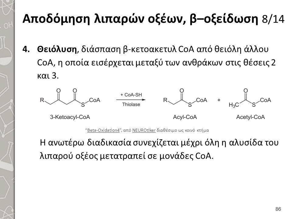 Αποδόμηση λιπαρών οξέων, β–οξείδωση 8/14 4.Θειόλυση, διάσπαση β-κετοακετυλ CoA από θειόλη άλλου CoA, η οποία εισέρχεται μεταξύ των ανθράκων στις θέσεις 2 και 3.