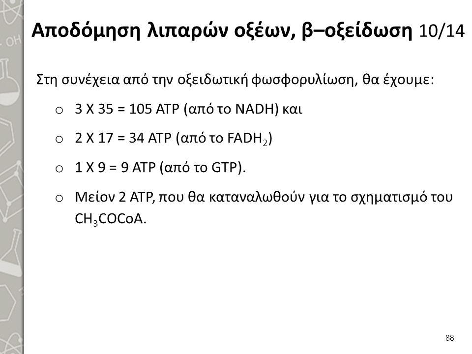 Αποδόμηση λιπαρών οξέων, β–οξείδωση 10/14 Στη συνέχεια από την οξειδωτική φωσφορυλίωση, θα έχουμε: o 3 Χ 35 = 105 ΑΤΡ (από το NADH) και o 2 Χ 17 = 34 ΑΤΡ (από το FADH 2 ) o 1 Χ 9 = 9 ΑΤΡ (από το GTP).