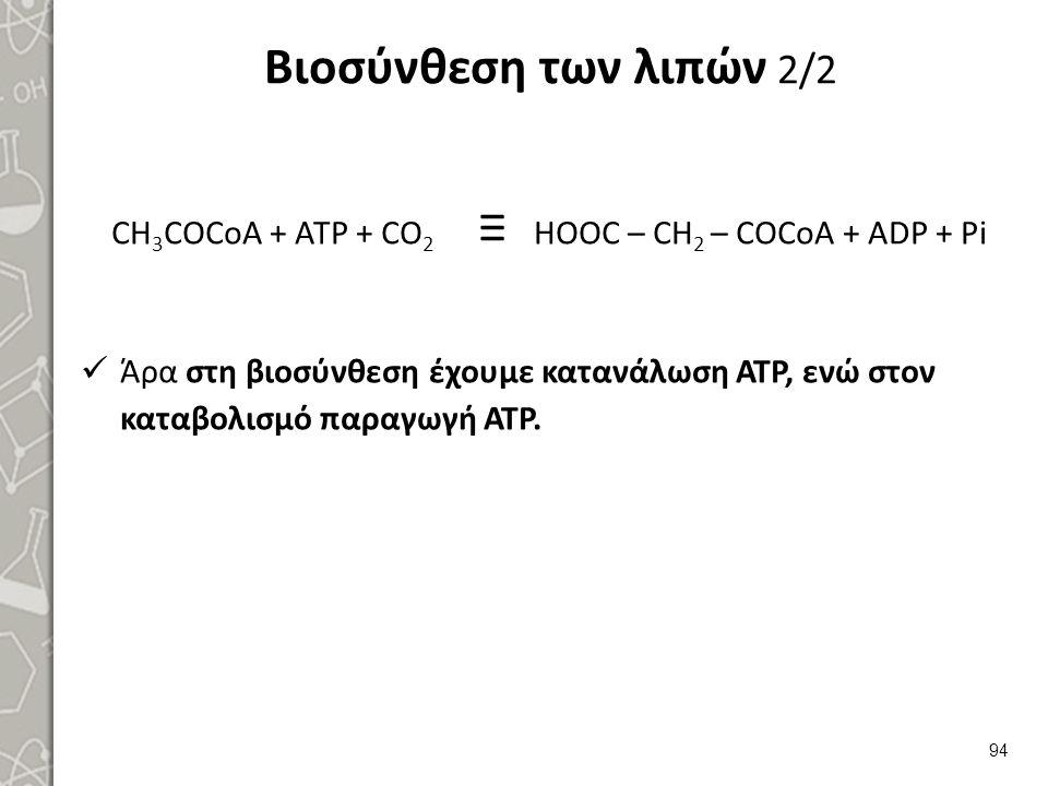 Βιοσύνθεση των λιπών 2/2 CH 3 COCoA + ATP + CO 2 ≡ HOOC – CH 2 – COCoA + ADP + Pi Άρα στη βιοσύνθεση έχουμε κατανάλωση ΑΤΡ, ενώ στον καταβολισμό παραγωγή ΑΤΡ.