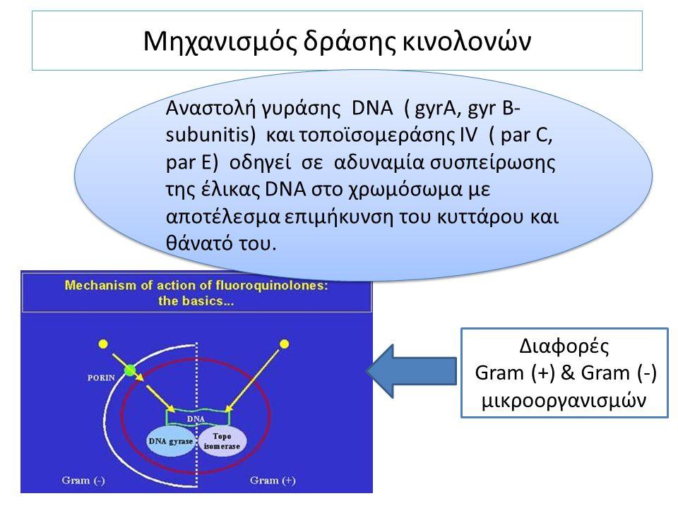Μηχανισμός δράσης κινολονών Αναστολή γυράσης DNA ( gyrA, gyr B- subunitis) και τοποϊσομεράσης IV ( par C, par E) οδηγεί σε αδυναμία συσπείρωσης της έλ