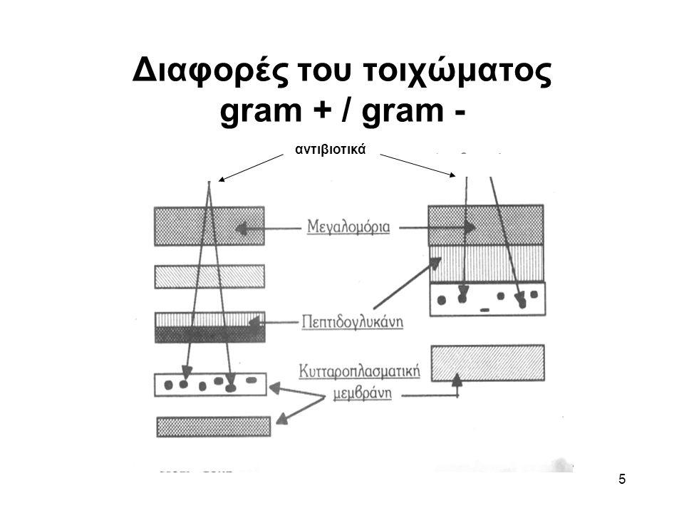 5 Διαφορές του τοιχώματος gram + / gram - αντιβιοτικά