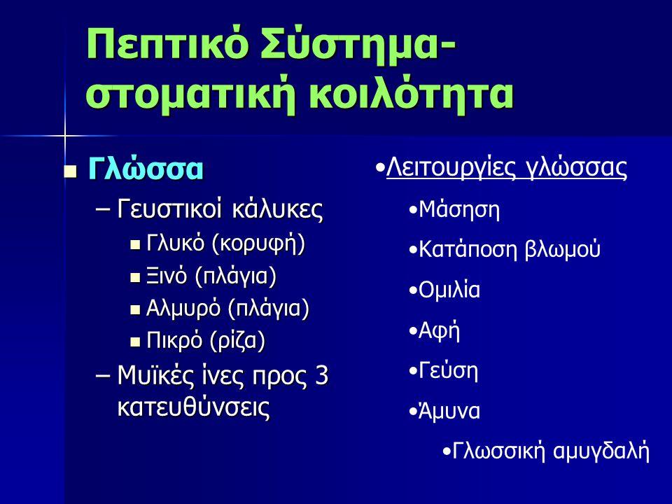 Γλώσσα Γλώσσα –Γευστικοί κάλυκες Γλυκό (κορυφή) Γλυκό (κορυφή) Ξινό (πλάγια) Ξινό (πλάγια) Αλμυρό (πλάγια) Αλμυρό (πλάγια) Πικρό (ρίζα) Πικρό (ρίζα) –