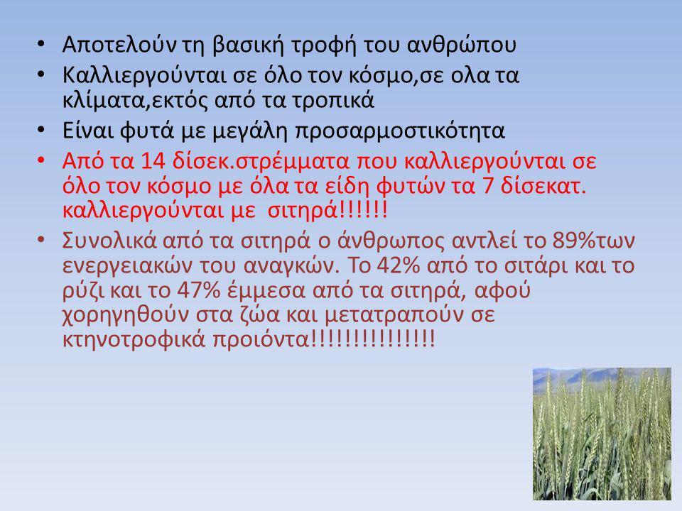 Αποτελούν τη βασική τροφή του ανθρώπου Καλλιεργούνται σε όλο τον κόσμο,σε ολα τα κλίματα,εκτός από τα τροπικά Είναι φυτά με μεγάλη προσαρμοστικότητα Α