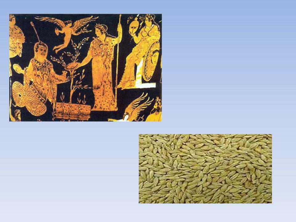 Η σίκαλη καλλιεργείται κυρίωςγια την παραγωγή καρπού προς ανθρώπινη κατανάλωση (ψωμί, φρυγανιές,μπισκότα,μπύρα,ουϊσκι ) Επίσης ο καρπός χρησιμοποιείται για ζωοτροφή σε μείγμα με άλλους καρπούς Θεωρείται ότι είναι διαιτητική Το τριτικάλε προέκυψε από διαστάυρωση σιταριού με σίκαλη Αντέχει περισσότερο σε χαμηλές θερμοκρασίες από το σιτάρι και αποδίδει καλύτερα σε όξινα και αμμώδη εδάφη Ο καρπός του χρησιμοποιείται ως αλεύρι για ψωμί,ως ζωοτροφή και βιομάζα