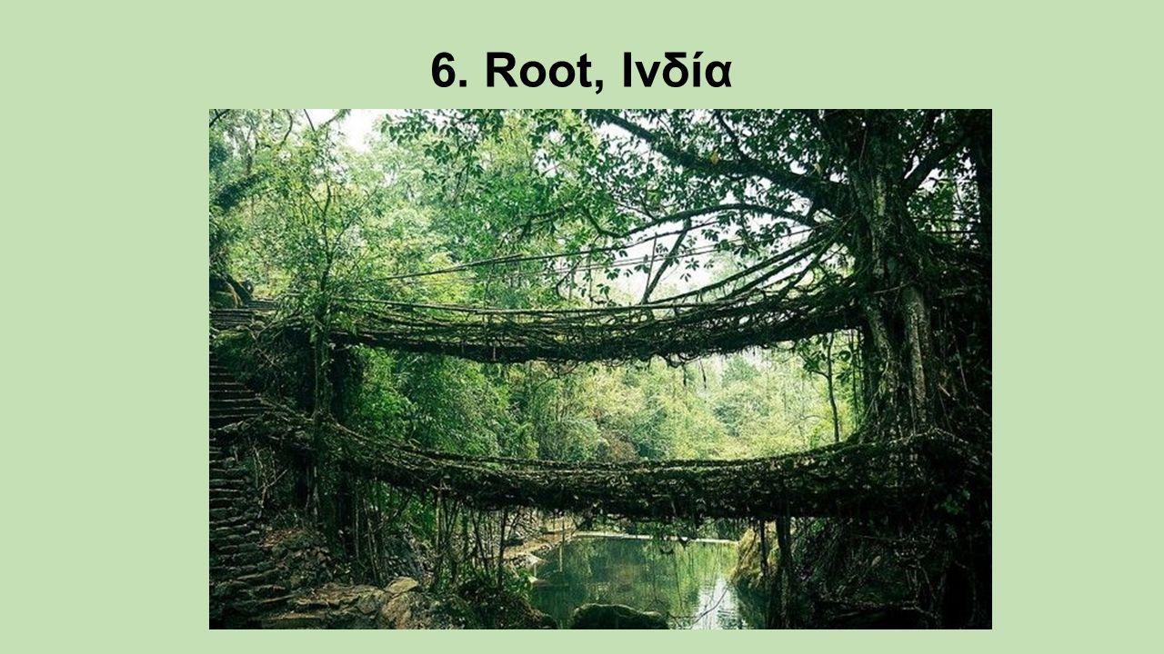 6. Root, Ινδία