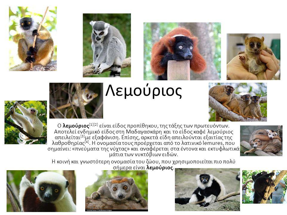 Λεμούριος Ο λεμούριος [1][2] είναι είδος προπίθηκου, της τάξης των πρωτευόντων. Αποτελεί ενδημικό είδος στη Μαδαγασκάρη και το είδος καφέ λεμούριος απ