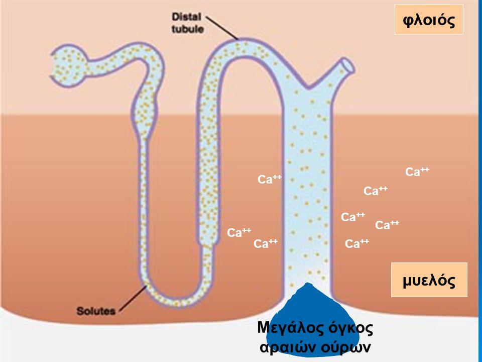 ΥΠΕΡΑΣΒΕΣΤΙΑΙΜΙΑ Προβλήματα συμπύκνωσης μπορεί να εμφανιστούν κλινικά εάν η [Ca ++ ] είναι επίμονα πάνω από 11 mg/dl φλοιός μυελός Μεγάλος όγκος αραιώ