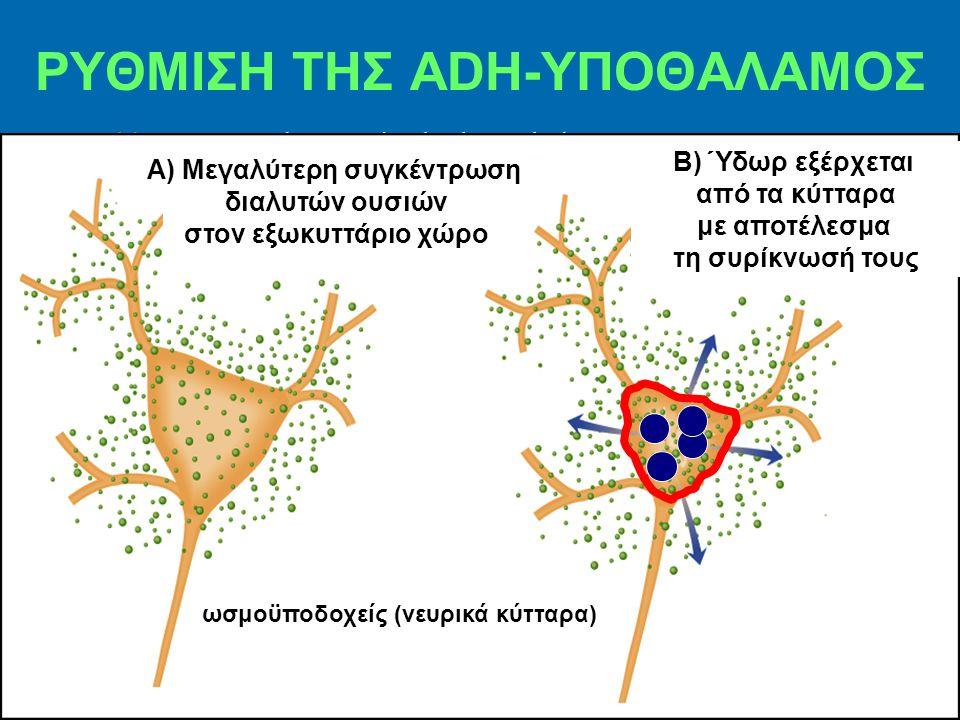 Thirsty center locates in the hypothalamus. ΡΥΘΜΙΣΗ ΤΗΣ ADH-ΥΠΟΘΑΛΑΜΟΣ Α) Μεγαλύτερη συγκέντρωση διαλυτών ουσιών στον εξωκυττάριο χώρο Β) Ύδωρ εξέρχετ