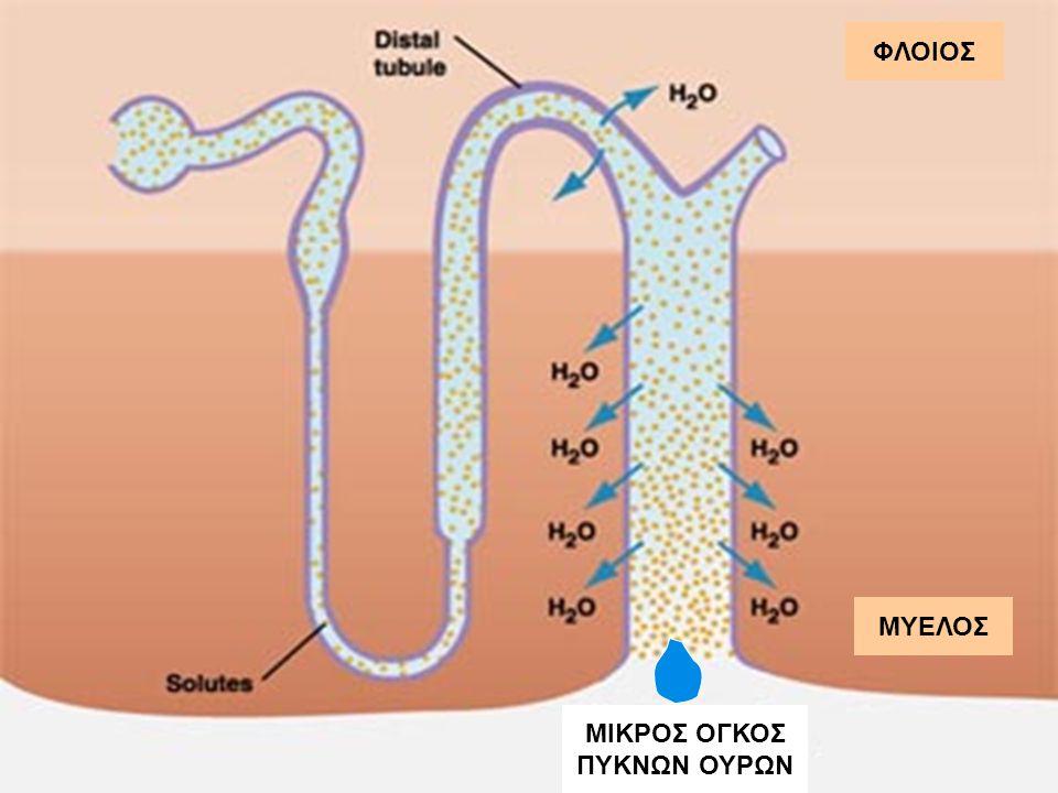 Η χορήγηση ADH θα οδηγήσει σε αύξηση της ωσμωτικότητας των ούρων (και ισοδύναμη πτώση στην αποβολή ούρων) πάνω από 100% στον πλήρη κεντρικό άποιο διαβ