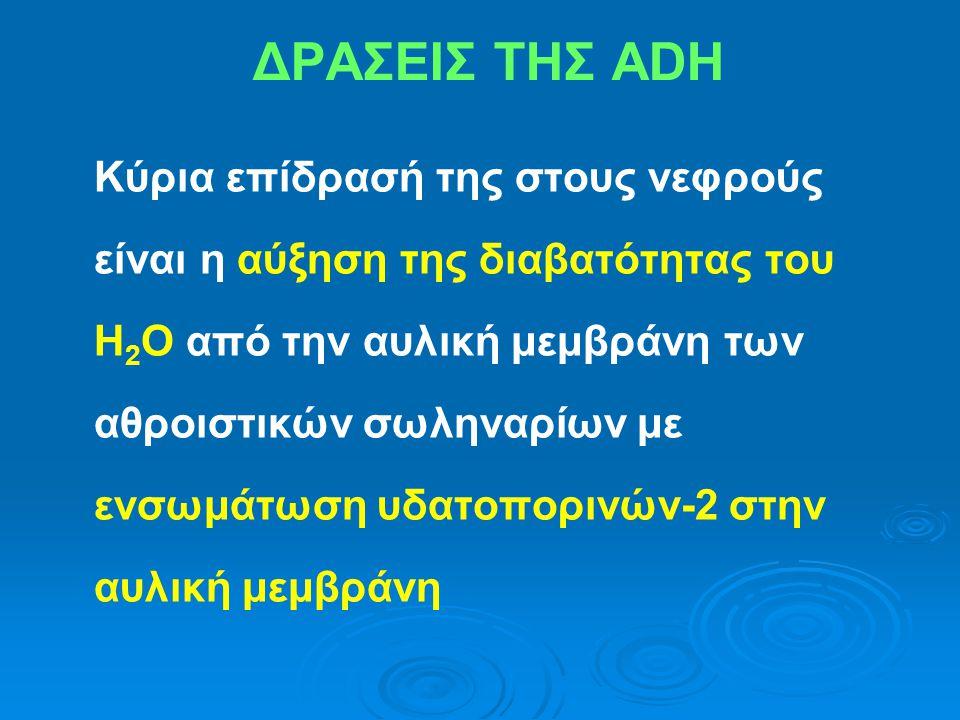 ΔΡΑΣΕΙΣ ΤΗΣ ADH Κύρια επίδρασή της στους νεφρούς είναι η αύξηση της διαβατότητας του Η 2 Ο από την αυλική μεμβράνη των αθροιστικών σωληναρίων με ενσωμ