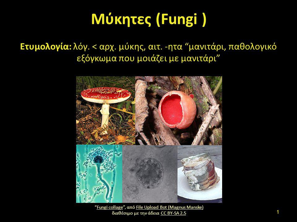 """Μύκητες (Fungi ) Ετυμολογία: λόγ. < αρχ. μύκης, αιτ. -ητα """"μανιτάρι, παθολογικό εξόγκωμα που μοιάζει με μανιτάρι"""" """"Fungi collage"""", από File Upload Bot"""
