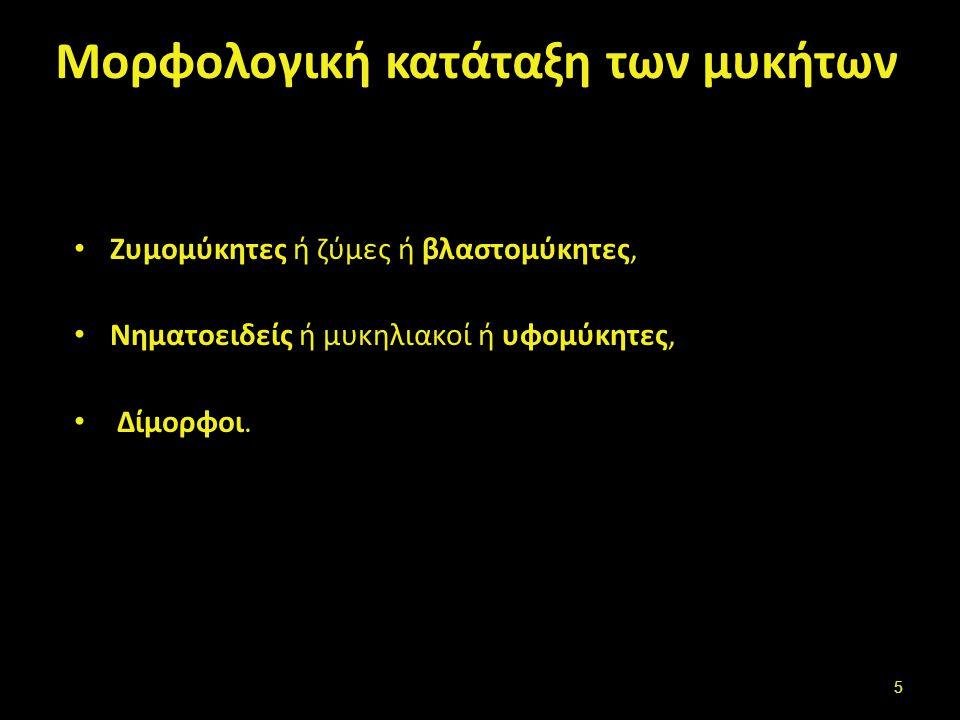 Μορφολογική κατάταξη των μυκήτων Ζυμομύκητες ή ζύμες ή βλαστoμύκητες, Νηματοειδείς ή μυκηλιακοί ή υφομύκητες, Δίμορφοι. 5