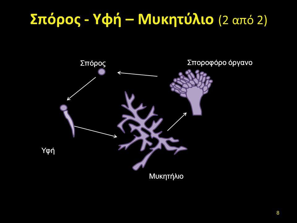 Σπόρος - Υφή – Μυκητύλιο (2 από 2) Σπόρος Υφή Μυκητήλιο Σποροφόρο όργανο 8