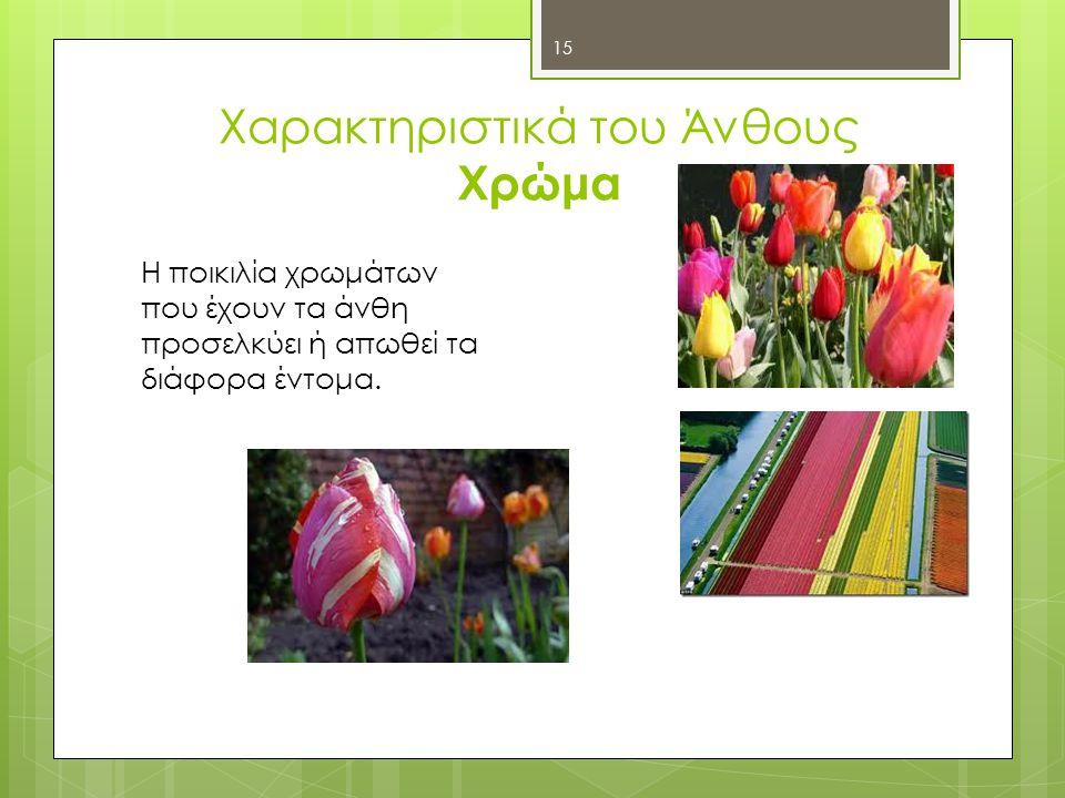 Χαρακτηριστικά του Άνθους Χρώμα Η ποικιλία χρωμάτων που έχουν τα άνθη προσελκύει ή απωθεί τα διάφορα έντομα.