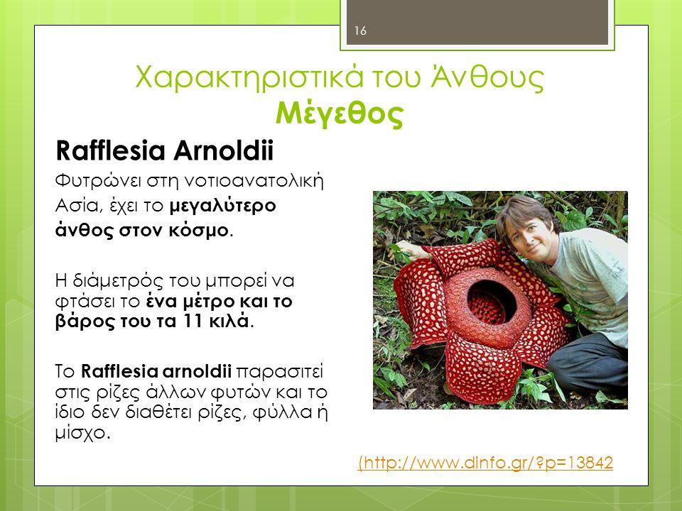 Χαρακτηριστικά του Άνθους Μέγεθος Rafflesia Αrnoldii Φυτρώνει στη νοτιοανατολική Ασία, έχει το μεγαλύτερο άνθος στον κόσμο.